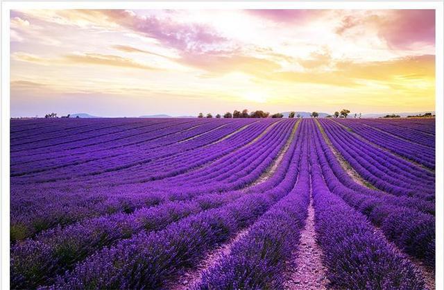 Custom photo wallpaper large 3d sofa tv background wallpaper mural wall purple lavender fields - Lavender purple wallpaper ...