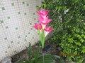 2 шт./лот Большой размер анти-истинные Солнечные лампы цветы лилии солнечный свет газон сад дома вне елочные украшения