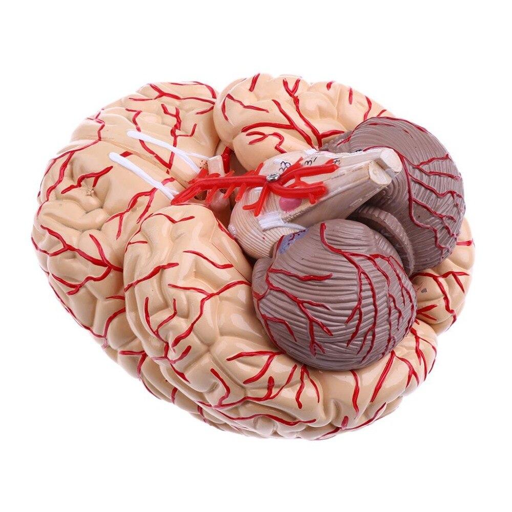 PVC büyük beyin anatomisi modeli beyin modeli arterler Tıbbi Anatomik Beyin Modeli,, 9 Parça, ile nummber