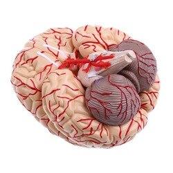 PVC große gehirn anatomie modell gehirn modell arterien Medizinischen Anatomischen Gehirn Modell, mit Arterien, 9 Teile, mit nummber