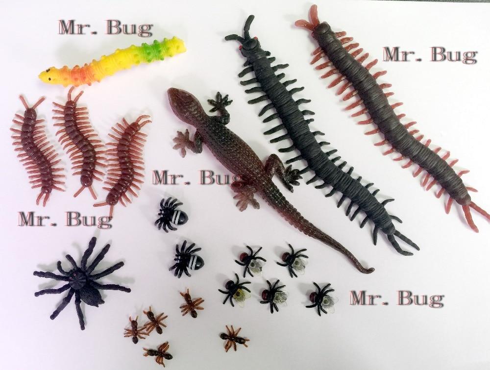 home bugs