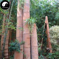 Buy Huge Dragon Bamboo Tree Seeds 100pcs Plant Bamboo Tree For Bamboo Garden