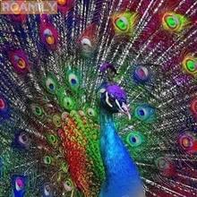 660 Gambar Sketsa Burung Merak Berwarna HD Terbaru
