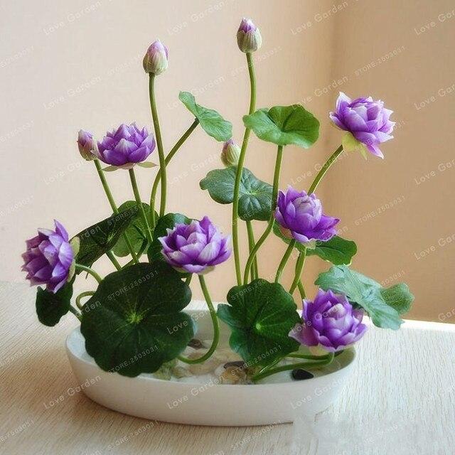 10 Pcs/Pack Bowl Lotus Bonsai Hydroponic Plants 2