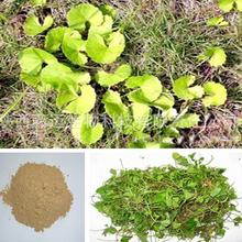 1kg 30:1 Centella Asiatica Extract Powder Wild Big Leaves Gotu Kola  Herbal Tea Detox Fitness Health Care Chinese Herbs H5039-50