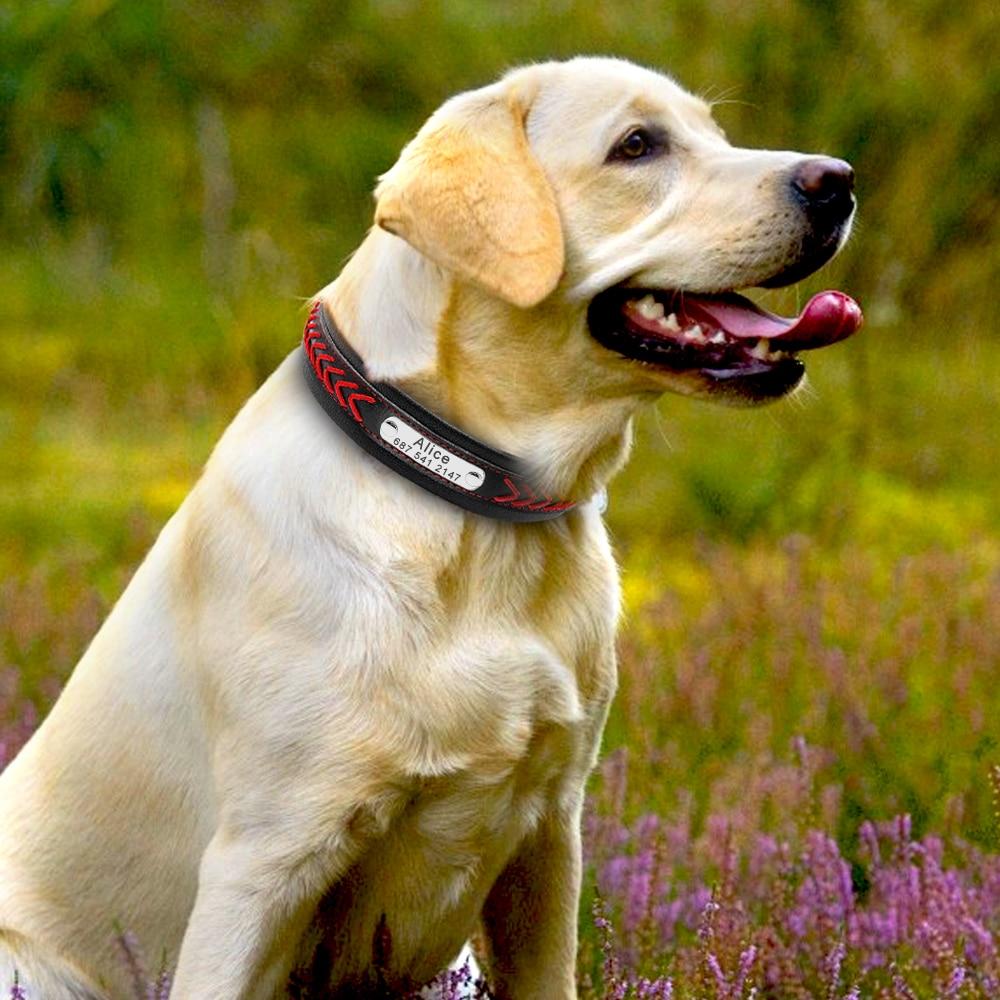 HTB1x kGXh rK1RkHFqDq6yJAFXab - Halsband hond met naam en telefoonnummer robuust