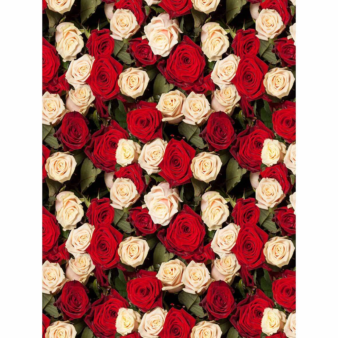 Allenjoy Wedding White Red Multiple Rose Photography Background