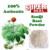 100g Superfine Notoginseng Pure Pó/Tienchi Pó Anti-envelhecimento Beleza sanqi pó de raiz de pseudo-ginseng erva chá frete grátis