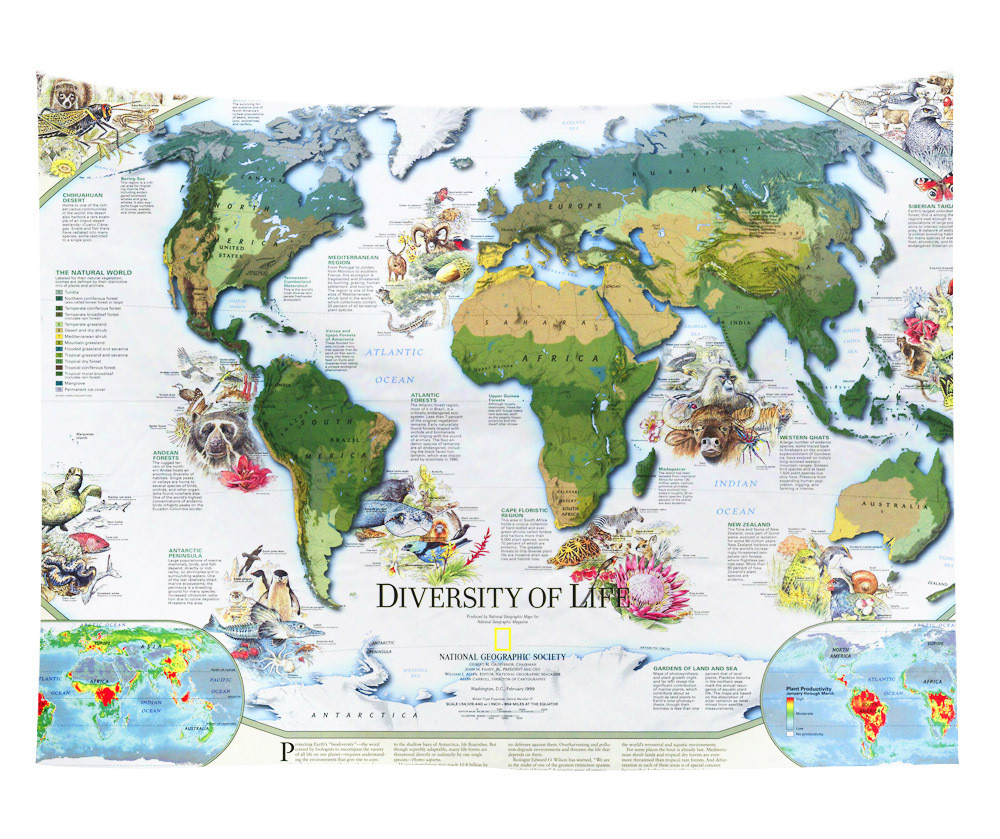 Cilected new world map tapestry bedroom decorative polyester fabric cilected new world map tapestry bedroom decorative polyester fabric wall hanging tapestry watercolor map for wall gumiabroncs Images