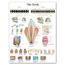 WANGART анатомические диаграммы человеческие зубы диаграмма холст картина, печатный плакат Настенные картины для медицинского образования офиса домашний декор