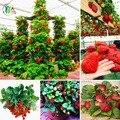 600 UNIDS gigante Roja de Escalada Semillas de Fresa Frutas raras semillas de bonsai Semillas Para El Hogar y Jardín de DIY Envío Gratis