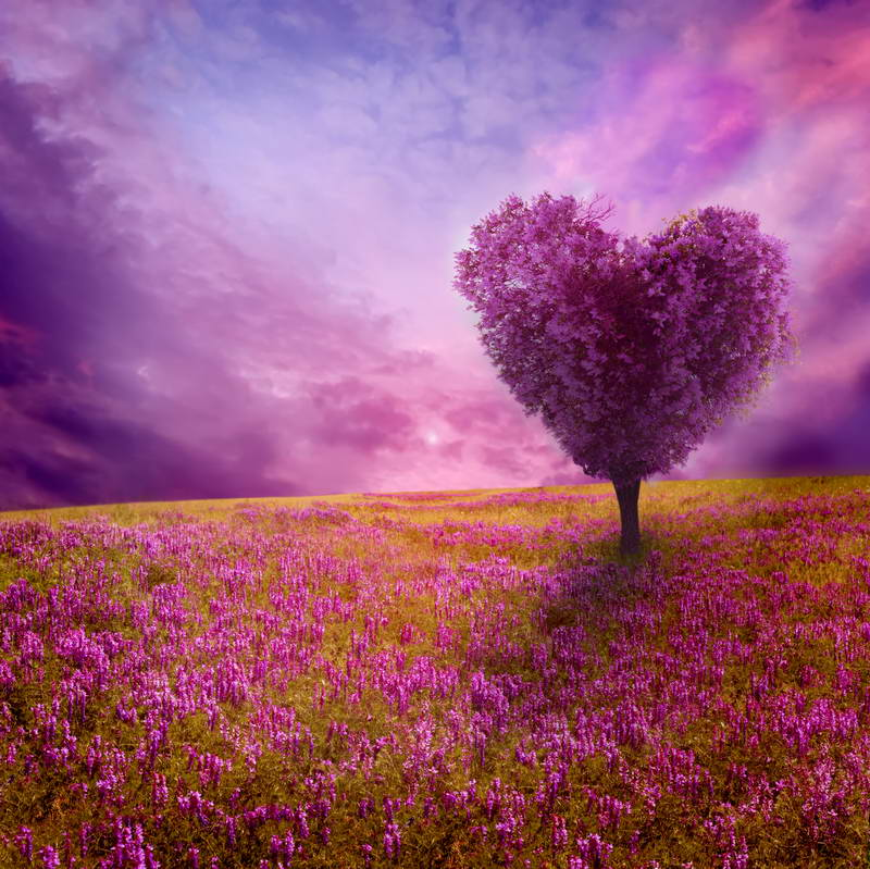 Clouds Heart Tree Purple Field Of Flowers Grass Backdrop