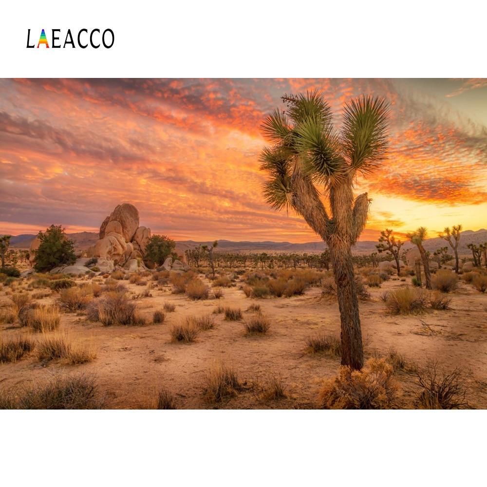 Laeacco Desert Cactus Sunset Tree Plant Stone Aurora ...