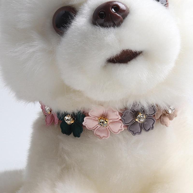 cute boy dog collars