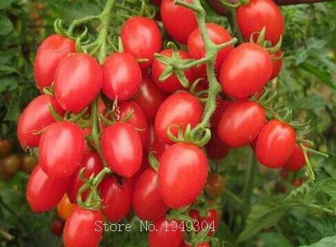 100pcs climbing Tomato edible Tomato bonsai Vegetable plants food bonsai pot home garden planting in Bonsai from Home Garden