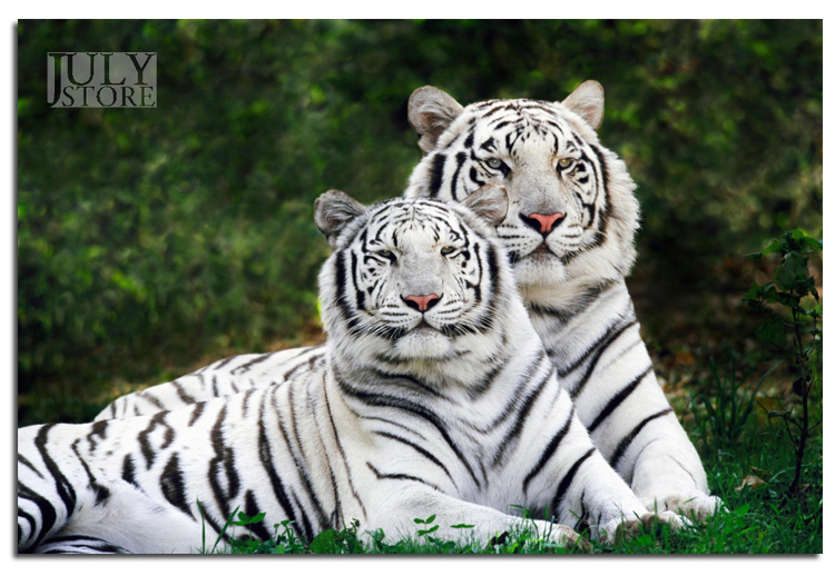 Картинки На Обои Телефона Животные