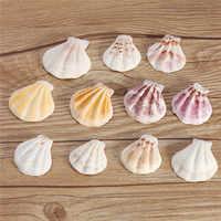10 stücke Mediterranen Stil Schöne Strand Muscheln Mix Sea Natürliche Shells Shell Handwerk für Aquarium Aquarium Dekor