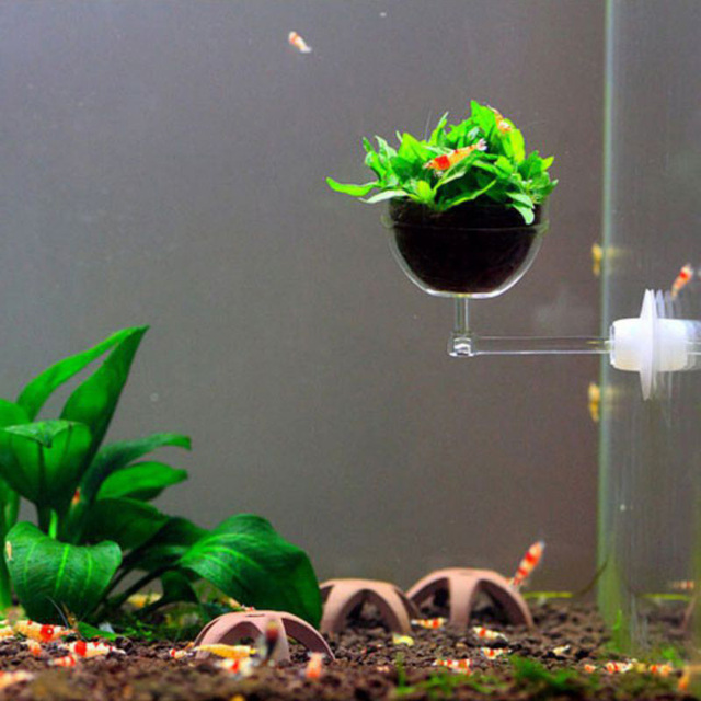 Aquatic Plant Pot Cup Aquarium Fish Tank Crystal White Holder With Suction  Cup Seed Aquarium Decoration