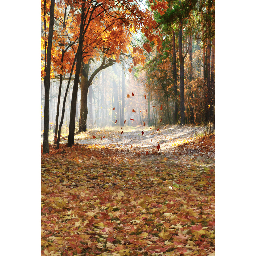 5x7ft Sun Autumn Fall Yellow Maple Forest Woods Tree Path