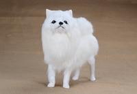 Khoảng 20x21 cm con chó mô phỏng trắng Pomeranian bất lông lông cứng model trang chủ trang trí quà tặng h1157