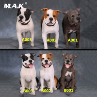 1/6 Scale MRZ029 The Simulation Animal Figure Model American Staffordshire Terrie dog model for 12 inches Action Figure
