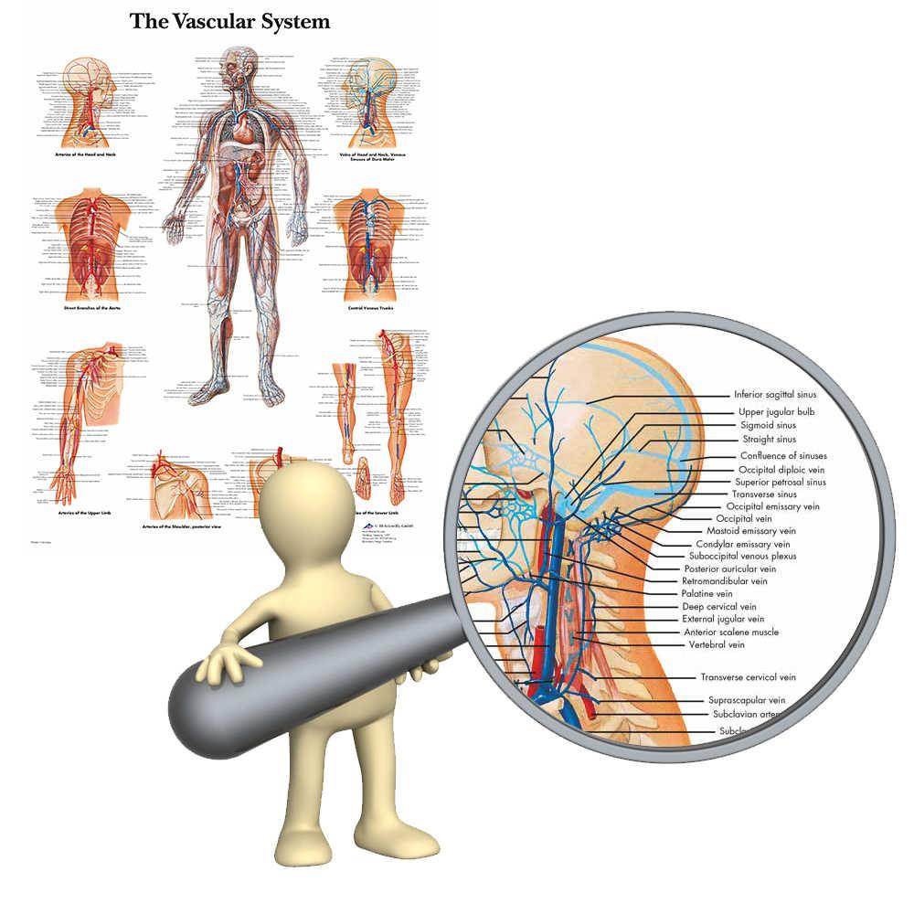 WANGART, васкулярная система, диаграмма, плакат, карта, холст, картина, настенные картинки для медицинского образования, доктора, офисный класс, домашний декор