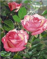 MaHuaf X860 Pink Rose Flower Plant Painting Coloring By Numbers DIY Oil Digital Hand Painted Canvas