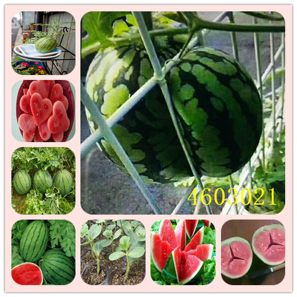 20 Pcs Chinese Delicious Square Circular The Oval  Watermelon Bonsai Rare Organic Easy Growing Sweet Edible FruitFree Shipping