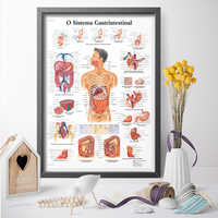 Human Anatomy Wall Art Canvas Painting Digestive System Medical Education Poster Print Home Decor No Frame Drop Shipping