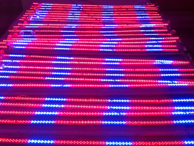 288pcs T8 LED Tube 120 cm 4 feet 18w 5mm led warm white/cool white red and blue mix AC85 265V free shipping via Fedex DHL