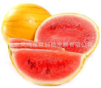 Beijing Xin Xi Orange watermelon 10seeds organic vegetable seeds