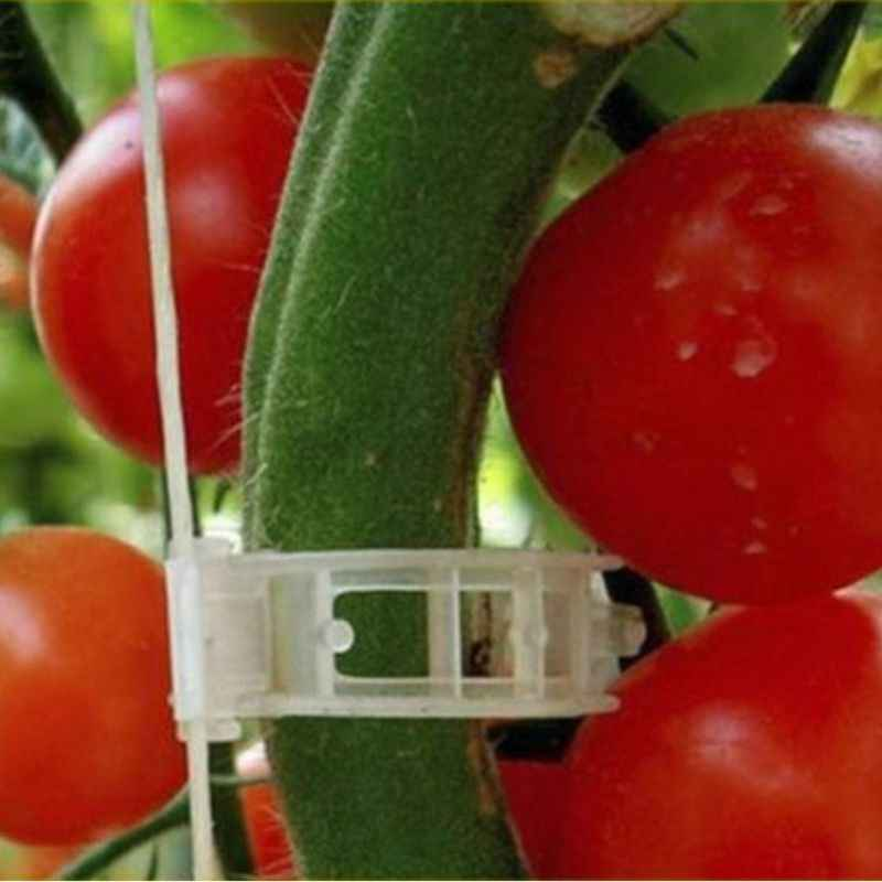 Plant Support Clips for Garden Tomato Garden Vegetables Vine to Grow Upright and Makes Plants Healthier Twine Clips