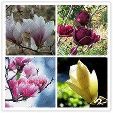 30Pcs Magnolia Denudata Bonsai Rare Red Yellow Pink White Yulan Tree Flower DIY Home Garden Plant