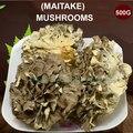 500g Organic Dried Maitake Mushroom Improve immunity Anti-cancer Health Care Supplements
