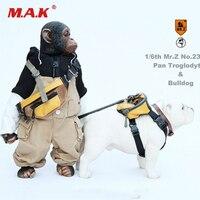 1/6 весы рисунок аксессуары для сцены Mr. Z животных модель № 23 соотношение шимпанзе и бульдог с одежда модель для 12 ''фигурку