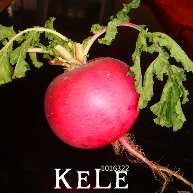 Loss Promotion!Redskins Fruit Radish Vegetable Seeds Z