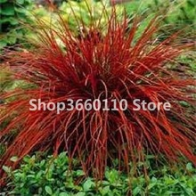 100 Pcs Plant  Rabbit Tails Grass Bonsai Colorful Fescue Bonsai Ornamental Grasses Bonsai For Home Garden Potted Plants Decor