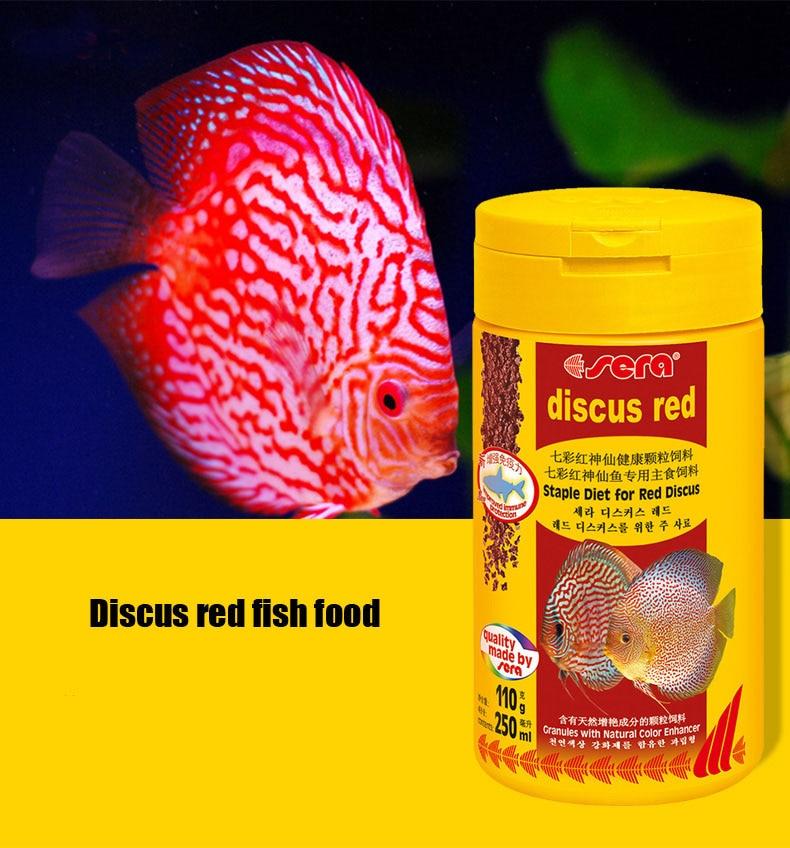 Buy discus fish food aquarium pigeon for Best place to buy discus fish