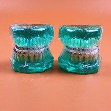 1pc Blue color Orthodontic teeth models half ceramic and half metal bracket dental education teeth Jaw