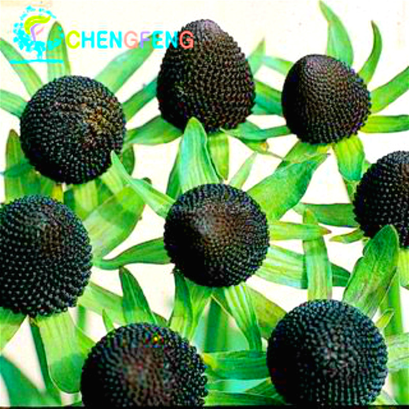 100pcs strawberry Seeds Direct Selling Indoor Plants Rare Color Seed Fruit Seeds Home Garden Diy Bonsai seed flowering plants
