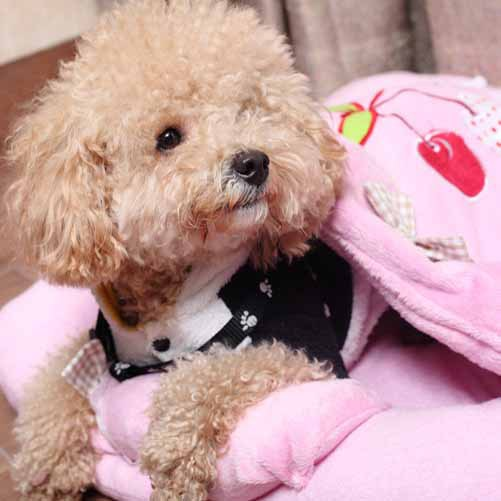 Soft Velour Pet Dog Bed With Pillow Princess Pink Doggie