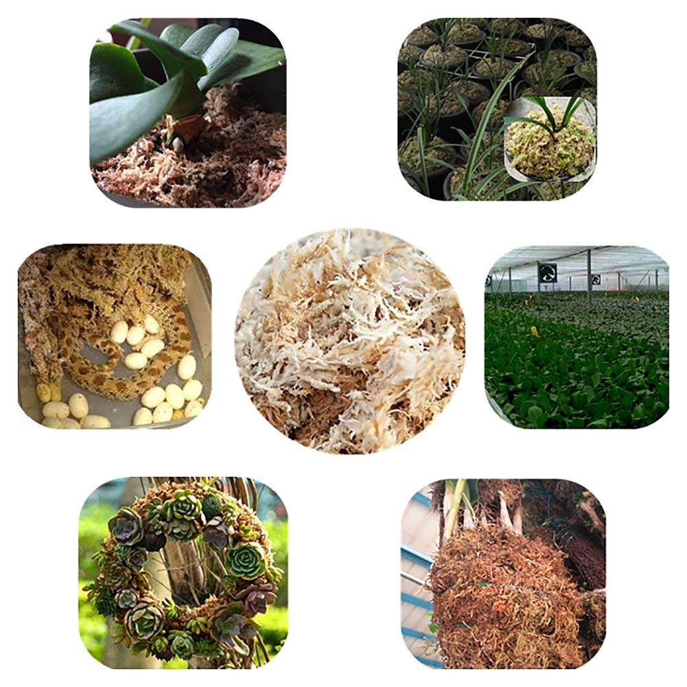 Image 4 - Decorative Sphagnum Dry Moss Phalaenopsis Orchids Soilless Cultivation Substrate Soil 12L Compressed Pack Flowers Accessories-in Artificial Lawn from Home & Garden