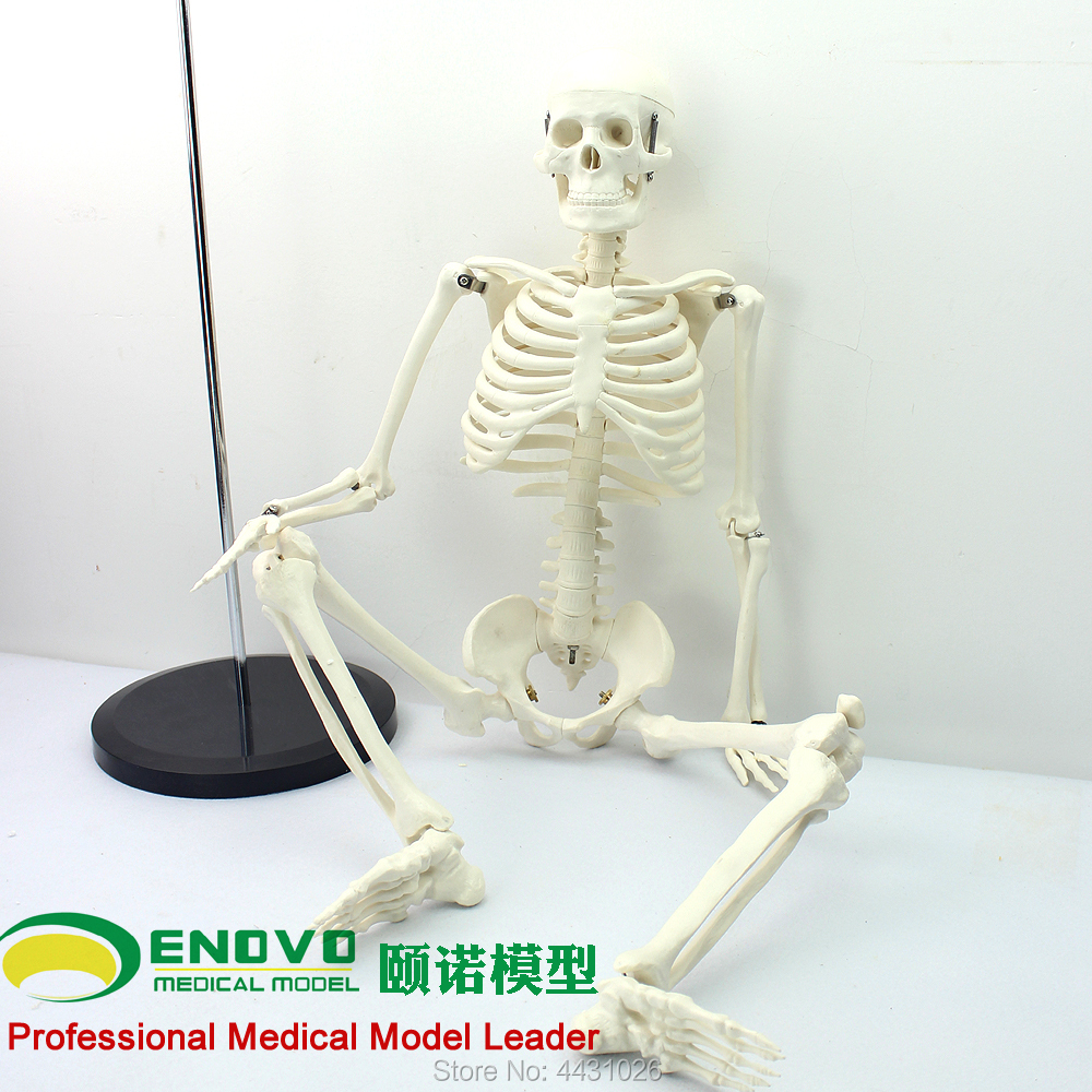 ENOVO Medical standard for fine arts and medicine 85CM skeleton model of human.skeleton model фата jewelry arts and liberal arts 0661