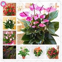 BONSAI 100pcs/bag Flower Plants Anthurium Andraeanu Balcony Potted Diy Plant Bonsai for Home Garden Decoation