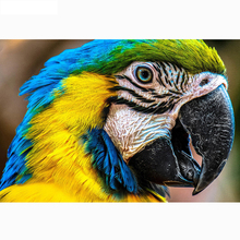 Full square/Round drill Diamond embroidery Parrot 5D DIY diamond Painting Cross Stitch Rhinestone Mosaic HYY full drill round diamond 5d diy painting embroidery cross stitch animal rhinestone mosaic arts stickers