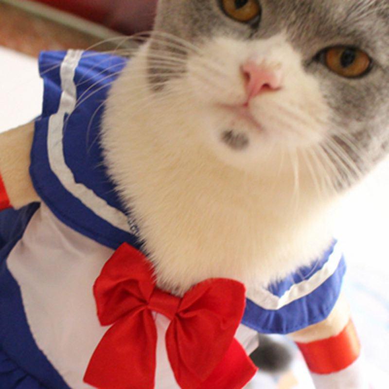 MPK Gatto Costumi  Sailor Moon Disegno del Gatto del Vestito (5 taglie  disponibili ora) in  MPK Gatto Costumi  Sailor Moon Disegno del Gatto del  Vestito (5 ... 14ddeb964d9