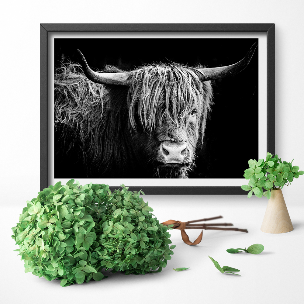 Schotse Hooglanders Wall Art Freedom Highland Cow Print and Poster Cattle Canvas Art Paintings for Living Room Decor