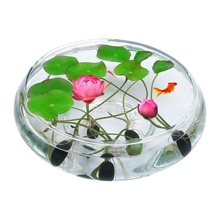 Hot Sale 5Pcs/Pack Bowl lotus Bonsai Hydroponic Plants Aquatic Flower Pot Lotus Water Lily plant Garden