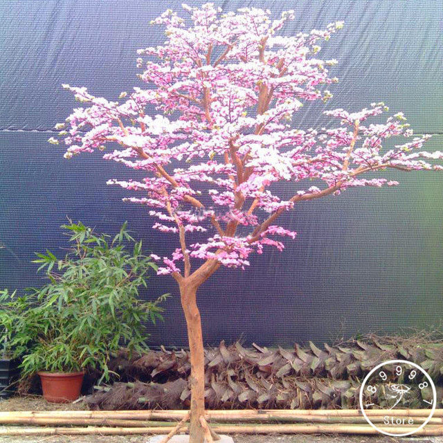 New Fresh  Pcs Lot Red Japanese Cherry Blossoms Plant Courtyard Garden Bonsai Tree Flores