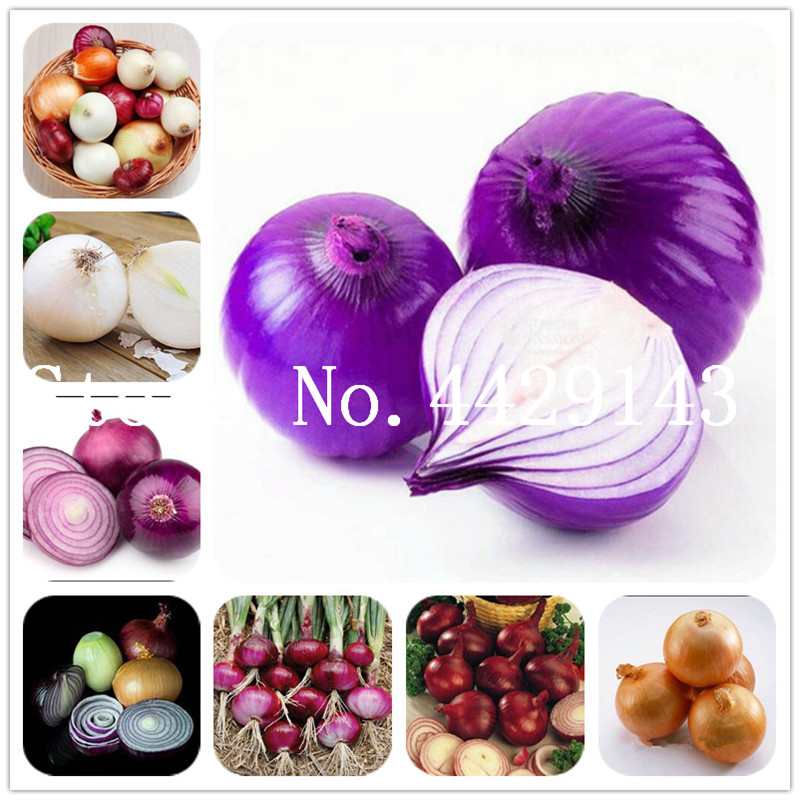 best top 10 fruit trader brands and get free shipping - 5kn1i93h